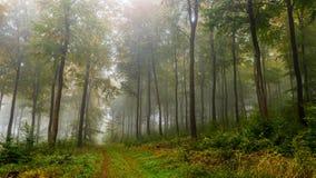 misty lasu Zdjęcie Stock