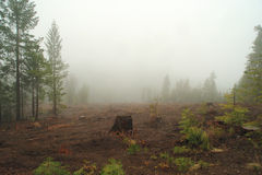Free Misty Logged Forest Stock Photos - 10372423