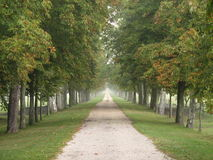 Misty long path. A misty,damp long path with trees Stock Photography