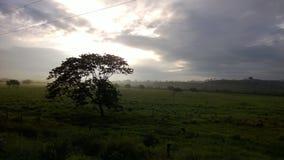 Misty Lush Green Field nell'Ecuador tropicale fotografia stock libera da diritti