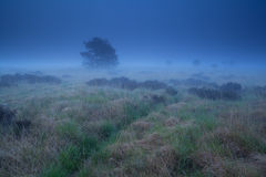 Misty marsh in dusk Royalty Free Stock Image