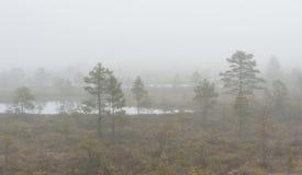 Misty marsh landscape stock photo