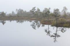 Misty marsh landscape Stock Image