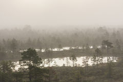 Misty marsh landscape royalty free stock images