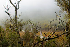Misty marsh. A misty marsh and vegetation in Madeira Royalty Free Stock Photography
