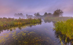 Misty Marshland river Royalty Free Stock Images