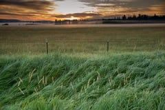 Misty Meadow bij Zonsopgang Royalty-vrije Stock Foto's