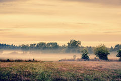Misty meadow landscape Stock Photo