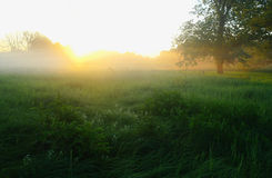 Misty meadow spring at sunrise Stock Images