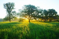 Misty meadow spring at sunrise Royalty Free Stock Photo