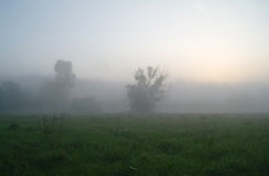 Misty meadow spring at sunrise Stock Photography
