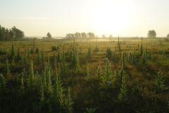 Misty meadow spring at sunrise Stock Image