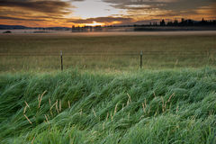 Misty Meadow at Sunrise Royalty Free Stock Photos