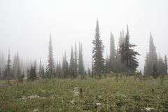 Misty Meadows Royalty Free Stock Photos