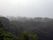 Misty Mexican Rainforest dans la province de Chiapas Image stock