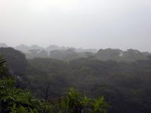 Misty Mexican Rainforest en la provincia de Chiapas Imagen de archivo