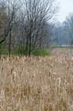 Misty Michigan wetlands Royalty Free Stock Photo