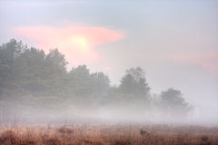 Misty moor at sunrise Stock Photo