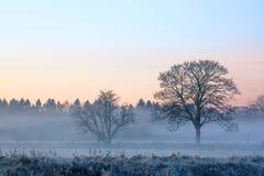 Misty Morn Imagens de Stock Royalty Free