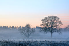 Misty Morn Royalty Free Stock Images