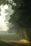 Misty morning. Misty fogy morning on countryside Stock Photography