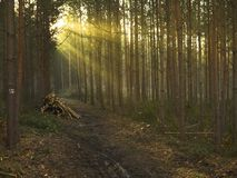 Misty morning. In Germany forest Stock Photo