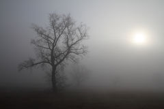 Misty morning Royalty Free Stock Photos