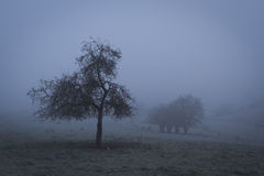 Misty morning Stock Images