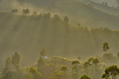 Misty Morning. Early misty morning in Pangalengan ,near Bandung,West Java . very beautiful scenere of mountain and tea plantation Royalty Free Stock Photo