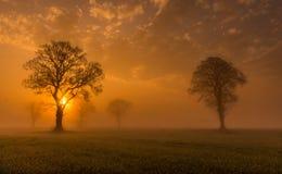 Misty Morning Foto de archivo libre de regalías