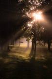 Misty Morning Fotografia Stock