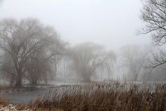 Misty Morning Arkivbild
