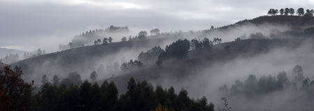 Misty morning Stock Photography