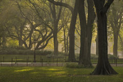Misty morning. Central park in the early morning mist and sun Stock Photography