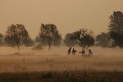 Misty morning. Preparing new range land Stock Image