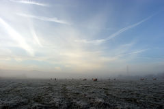 Misty morning. A mist covers a field on a frosty winter's early morning. There are sheep grazing in the mist. The grass is frozen Stock Photography