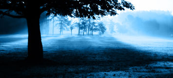 Misty Morning. In the park stock photo
