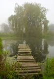 Misty morning. Misty autumn morning on the lake Stock Images