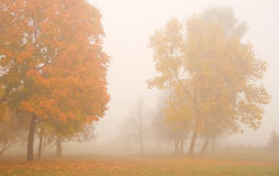 Misty morning. Misty autumn morning in a park Royalty Free Stock Images