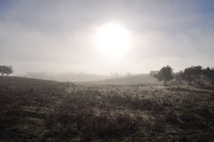 Misty morning in Alentejo Royalty Free Stock Photography