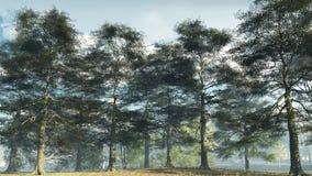 Misty Morning Ash Woodland Stock Images