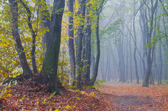 Misty morning in autumn forest Royalty Free Stock Image