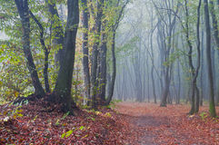 Misty morning in autumn forest Stock Photos
