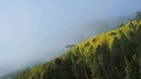 Misty morning on autumn mountain. Clouds of fog rise fast over forest. Timelaps stock video