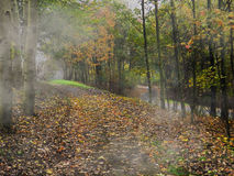 Misty morning in autumn woods Royalty Free Stock Photos
