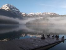 The Misty morning on the lake Royalty Free Stock Photography