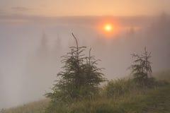 Misty morning Stock Image