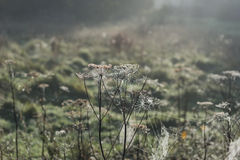 Misty morning cobweb Royalty Free Stock Photos