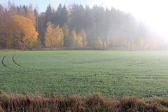 Misty Morning in the Country Royalty Free Stock Photography