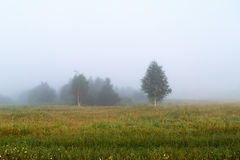 Misty morning in the countryside. Fog over a field. Silhouettes of trees. Foggy meadow. Space for text Royalty Free Stock Photo